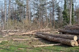 ქუთაისში ხეების მოჭრას კვლავ აპროტესტებენ