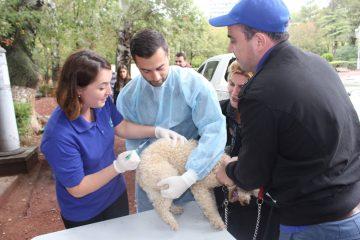 სურსათის ეროვნულმა სააგენტომ ცხოველთა უფასო ვაქცინაცია ჩაატარა