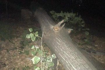 """""""დომუსის"""" დირექტორის განცხადებით, თამარაშვილის ქუჩაზე ხის მოჭრა უსაფრთხოების ნორმებიდან გამომდინარე მოხდა"""