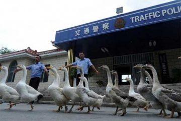 14  უცნაური შემთხვევა, რომელსაც მხოლოდ ჩინეთში ნახავთ