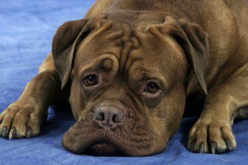 აეროპორტში მიტოვებული ძაღლი დარდისაგან მოკვდა