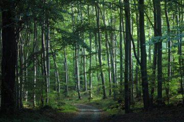 გერმანია საქართველოს ტყის ინვენტარიზაციისთვის თანხას გამოუყოფს