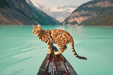 მოგზაური კატა სუკი