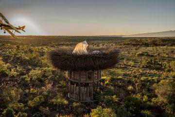 გიგანტური ჩიტის ბუდე კენიაში