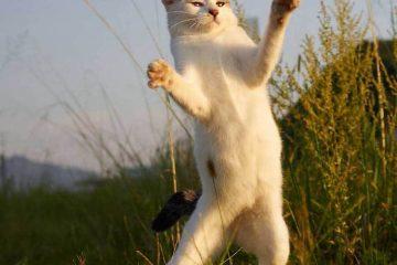 ფოტოსერია : ნინძა კატები
