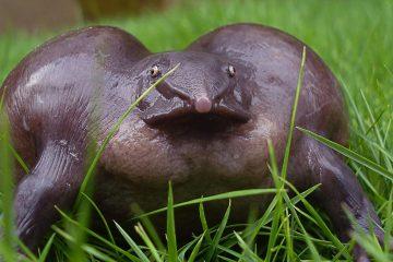 უცნაური სახეობები, რომელთა არსებობა დაგაეჭვებთ