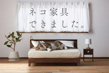 ავეჯის ექსპერტი კატები