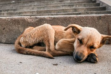 ჩინეთში, მამაკაცი ძაღლის ხორცით ვაჭრობისთვის დააკავეს