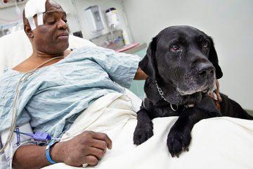 გმირი ძაღლები, რომლებიც სიცოცხლეს გვჩუქნიან