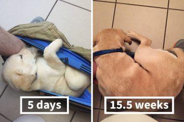 ფოტოები: როგორ იზრდება და იცვლება 5 დღის ლეკვი ერთი წლის განმავლობაში