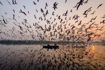 ინდონეზიაში გადაღებული თოლიების განსაცვიფრებელი ფოტოები