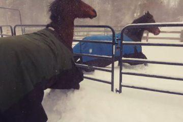 ვიდეო: პატრონმა თავისი ცხენი თოვლში სასეირნოდ გაუშვა, ცხენის რეაქცია კი უჩვეულოა