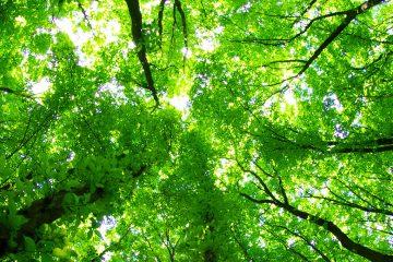 სამინისტრო: კოლხური ტყეები და ჭარბტენიანი ტერიტორიები UNESCO-ს მსოფლიო ბუნებრივი მემკვიდრეობის უბნად გამოცხადდება