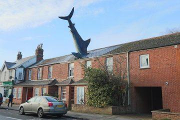 ფილმ HOUSE SHARK – ის ტრეილერი საინტერესო სანახაობას გვპირდება