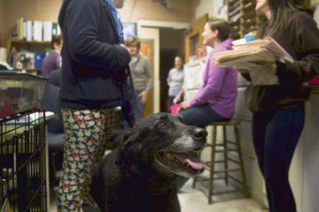 ოჯახმა დაკარგული ძაღლი 10 წლის შემდეგ იპოვა
