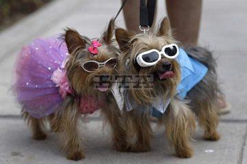 ვიდეო: პერუში ძაღლებს საოცარი ქორწილი გადაუხადეს