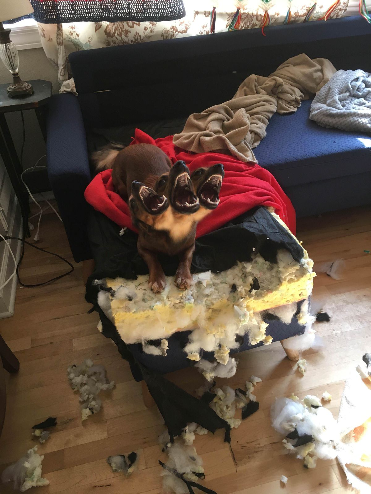 A little dog destroying a sofa turned into the photoshop battle we a little dog destroying a sofa turned into the photoshop battle we richly deserve malvernweather Gallery