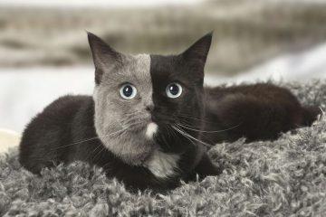 უჩვეულო გარეგნობის კატა ინტერნეტს იპყრობს