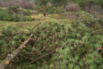 """მუხათწყაროსთან შპს """"ბათუმის ბიზნეს აკადემია""""-მ 110 ხე დარღვევით მოჭრა"""