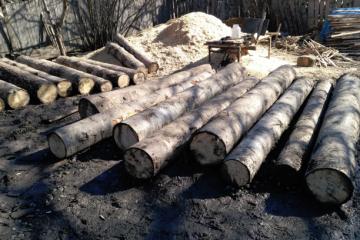 თებერვლის თვეში ხე-ტყის უკანონო მოპოვებისა და ტრანსპორტირების 573 ფაქტი გამოვლინდა