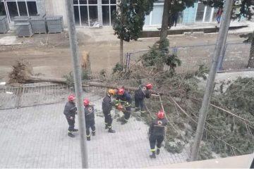 გურამიშვილის გამზირზე ძლიერმა ქარმა ხე წააქცია