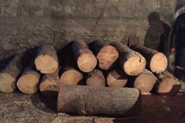 მარტის თვეში ხე-ტყის უკანონო მოპოვებისა და ტრანსპორტირების 758 ფაქტი გამოვლინდა