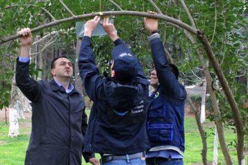 თბილისში აზიური ფაროსანას მონიტორინგის სისტემების დამონტაჟება მიმდინარეობს
