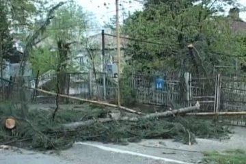 ძლიერმა ქარმა ოზურგეთში ხეები და ელექტრობოძები მოგლიჯა