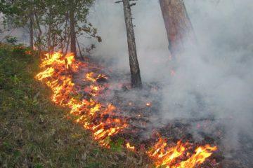 ამ დრომდე ვერ ხერხდება ცეცხლის ლოკალიზება საკირეთის ტყეში