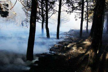 საკირეთის ტყეში ხანძრის კერების სალიკვიდაციო სამუშაოებს დღეს განახლდება
