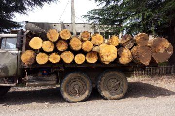მაისის თვეში ხე-ტყის უკანონო მოპოვებისა და ტრანსპორტირების 332 ფაქტი გამოვლინდა