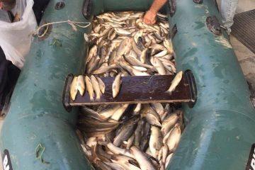 წალკის მუნიციპალიტეტში ელექტროშოკური აპარატით თევზჭერის ფაქტი გამოვლინდა