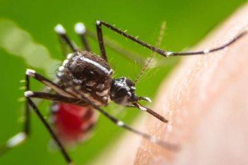 საფრანგეთში მერმა კოღოები აკრძალა