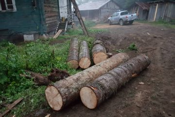 ივნისის თვეში ხე-ტყის უკანონო მოპოვებისა და ტრანსპორტირების 371 ფაქტი გამოვლინდა