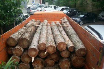 კოჯრის გზატკეცილზე ხე-ტყის უკანონო ტრანსპორტირების ფაქტი გამოვლინდა
