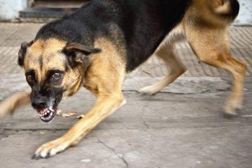 """""""ძაღლის მიერ ნებისმიერი დაკაწვრის, დაკბენის, დადორბვლის შემთხვევაში აუცილებელია, რომ დაუყოვნებლივ მივმართოთ რაბიოლოგს"""""""