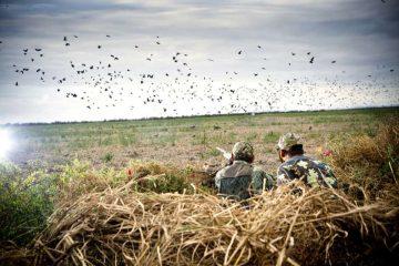 რა უნდა გაითვალისწინონ გადამფრენ ფრინველებზე ნადირობის მსურველებმა