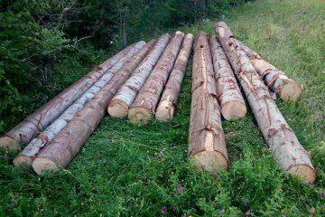 ივლისის თვეში ხე-ტყის უკანონო მოპოვებისა და ტრანსპორტირების 265 ფაქტი გამოვლინდა