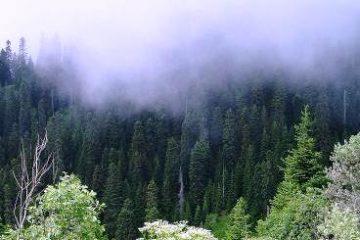 ბორჯომში ტყის აღდგენისთვის ახალ ნერგებს 144 ჰა ფართობზე დარგავენ