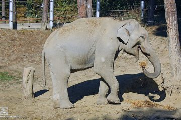 BBC თბილისის ზოოპარკის სპილოს ისტორიას მთელ მსოფლიოს გააცნობს