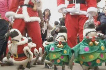 იაპონიაში გამორჩეული წინასაშობაო განწყობაა (ვიდეო)