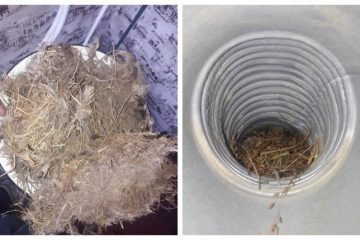 ჩიტის ბუდეების საფრთხე – გაზგამანაწილებელი კომპანია გაფრთხილებთ