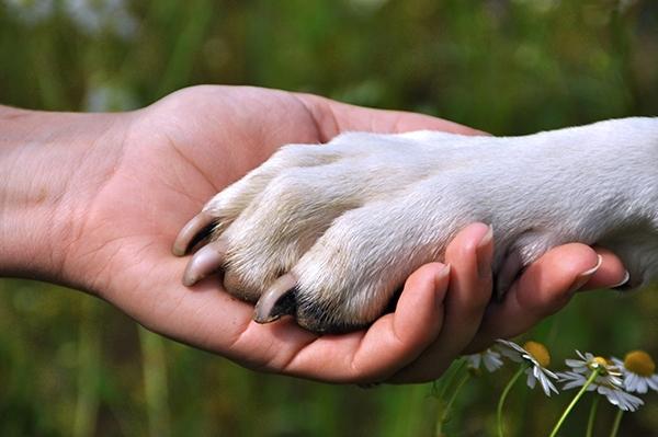 დაკარგული ძაღლისა და პატრონის ემოციური შეხვედრა (ვიდეო)